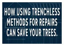 Saving Trees With Trenchless Sewer Repairs!